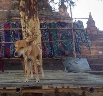 Un chien et un étalage de vêtements au pied d'une pagode à Bagan