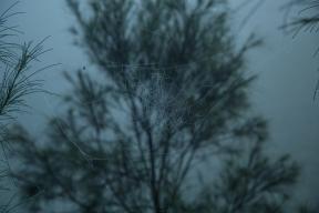 Une toile d'araignée emplie de gouttelettes d'eau