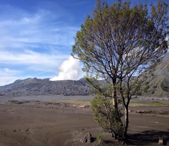 Un arbre dans le désert - Photo Éloïse