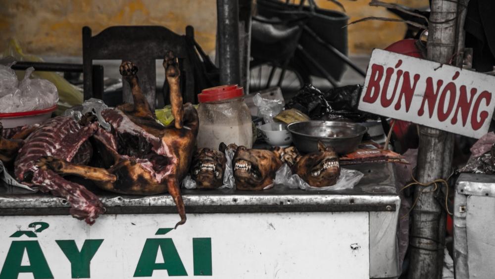 Chiens morts, Vietnam du Nord