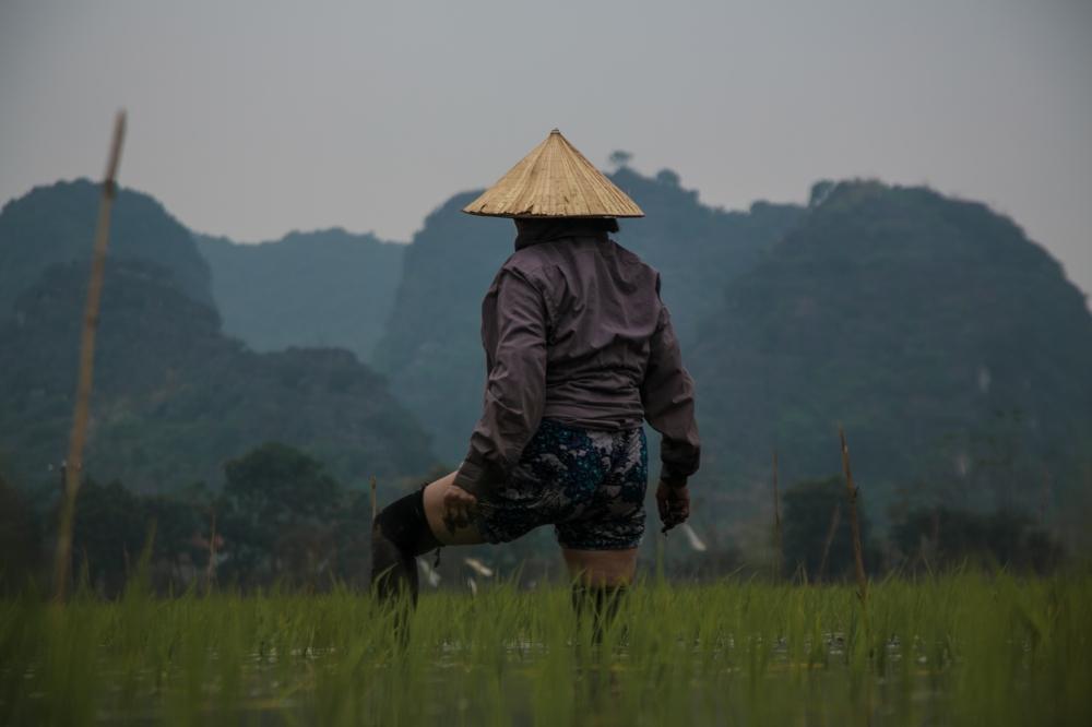 Vietnamienne, champs de riz